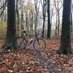 Herfst in Dijkgatbos